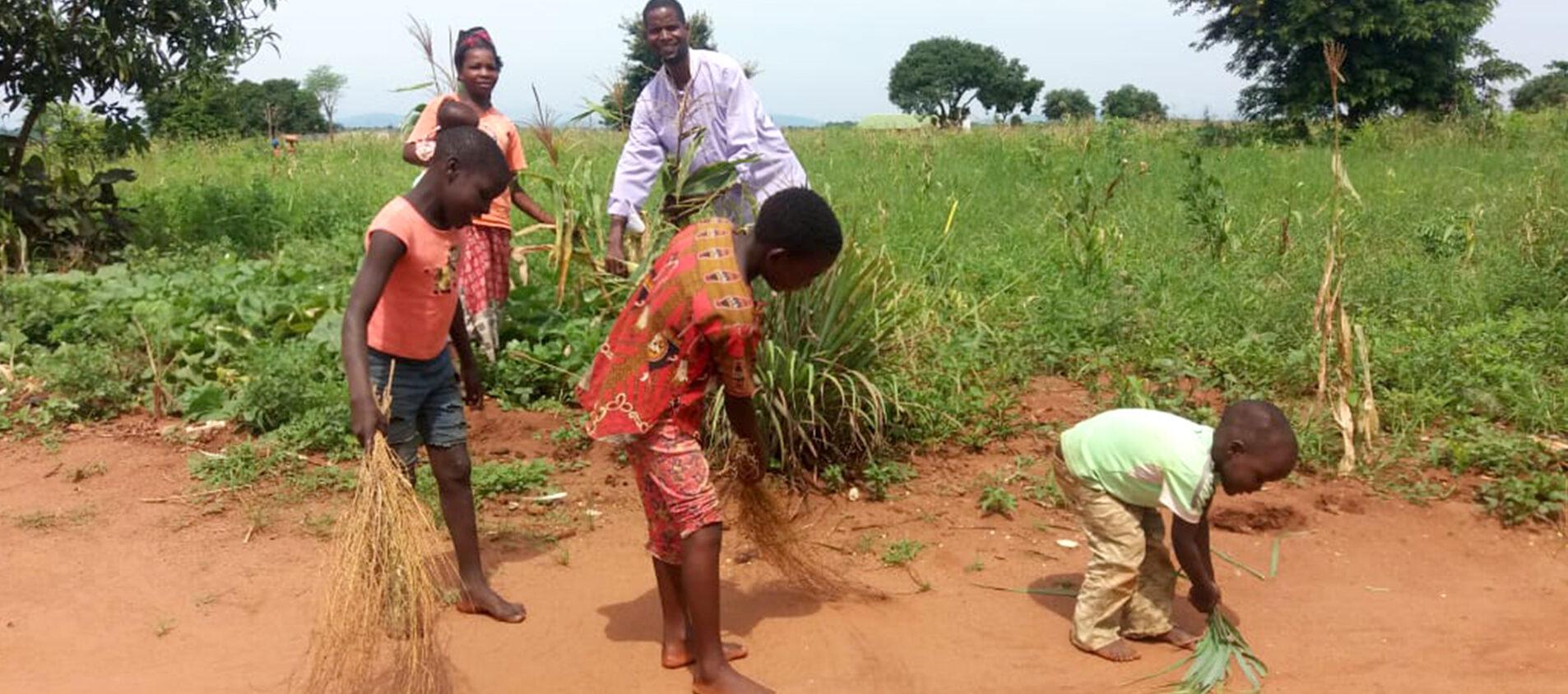 Hela familjen hjälps åt på majsfältet.