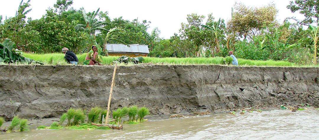 På öarna odlas ris ända ut till kanterna. Ibland rasar odlingarna ned i vattnet när floden stiger.
