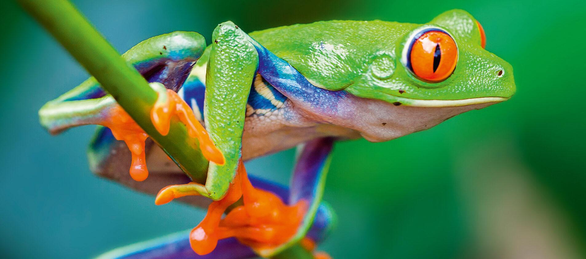 Varför är biologisk mångfald bra?
