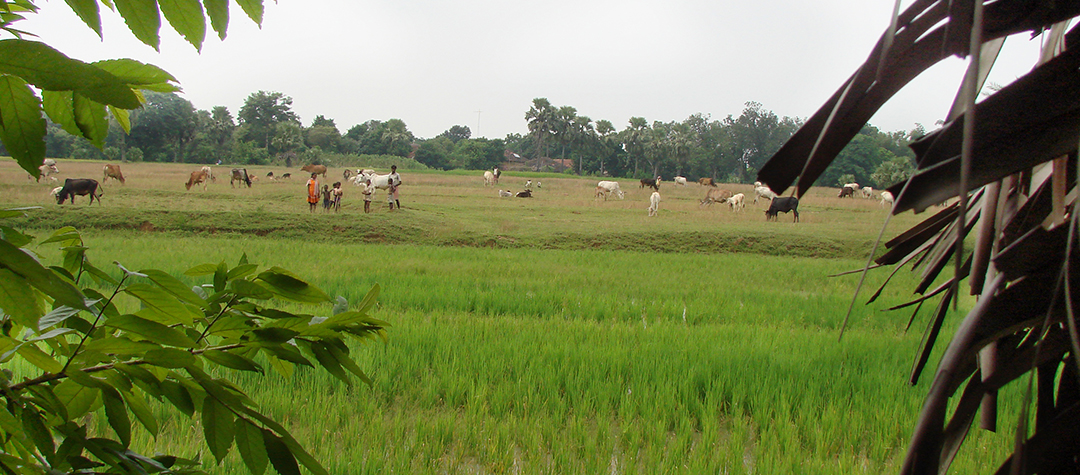 Hållbart jordbruk