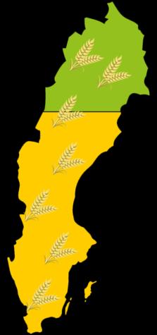 Två tredjedelar av Sveriges åkermark används till djurfoder.